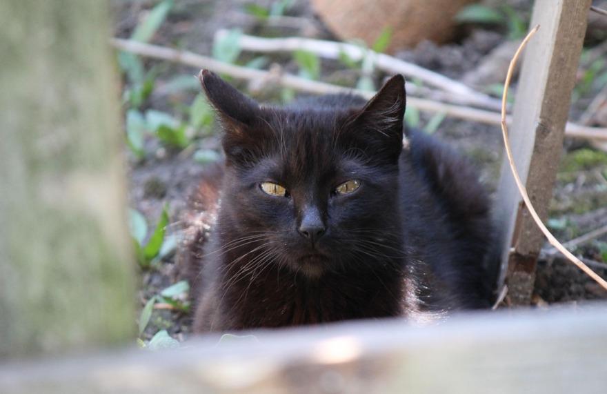 cat_chicago